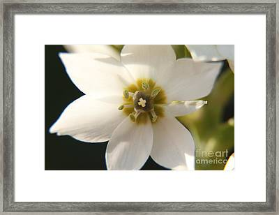 Botanical Purity Framed Print