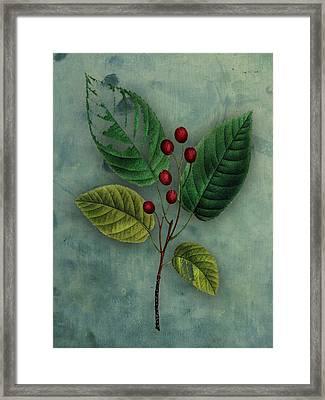 Botanical Silva Framed Print by Kandy Hurley