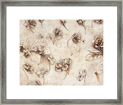 Botanical Table Framed Print by Leonardo Da Vinci