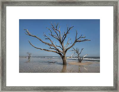 Botany Bay And Edisto Beach Framed Print
