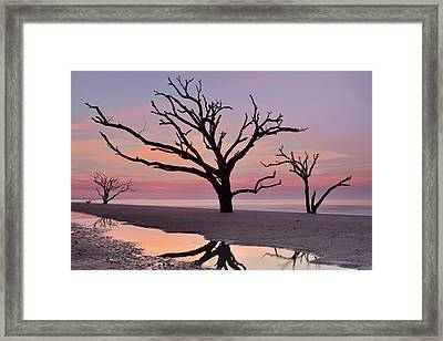 Botany Bay Trees Framed Print