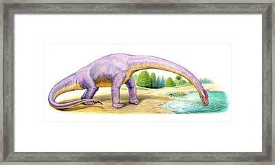 Bothriospondylus Dinosaur Framed Print by Deagostini/uig