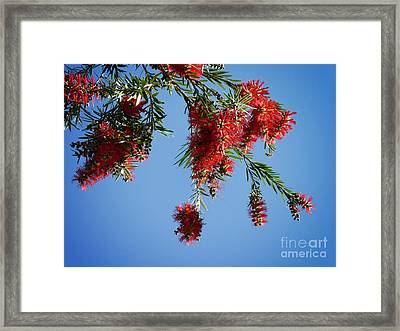 Bottle Brushing The Sky Framed Print