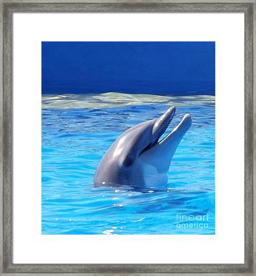 Bottle Nose Dolphin Framed Print