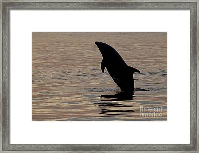 Framed Print featuring the photograph Bottlenose Dolphin by Meg Rousher