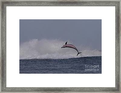 Bottlenose Dolphin Photo Framed Print
