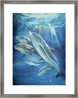 Bottlenose Dolphins Framed Print by Thomas J Herring