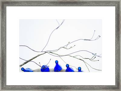 Bottles And Branches Framed Print