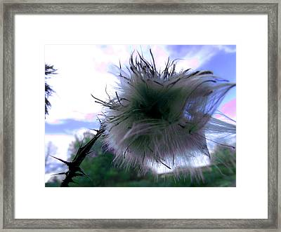Bottomland Thistle Framed Print by Erin Rednour