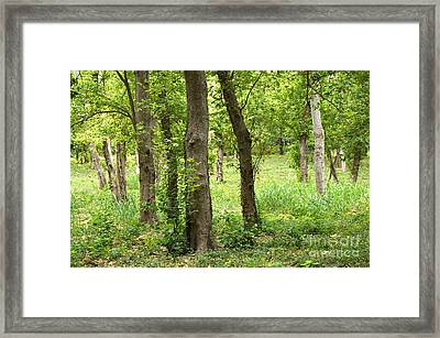 Bottomlands Framed Print by Gary Richards