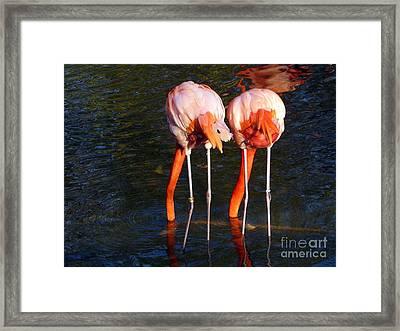Bottoms Up Framed Print by Avis  Noelle