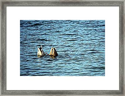 Bottoms Up Framed Print by Cathy Shiflett