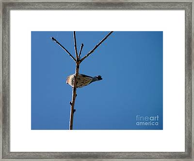 Framed Print featuring the photograph Bottoms Up by Meghan at FireBonnet Art