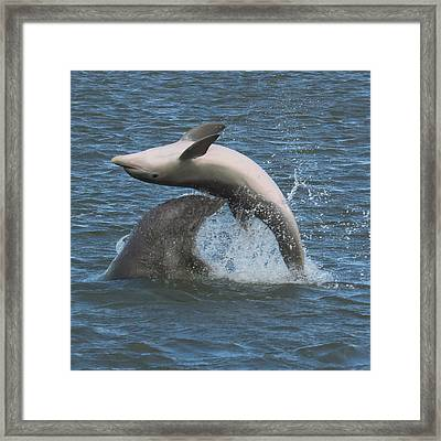 Framed Print featuring the photograph Bottom's Up by Patricia Schaefer
