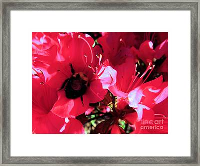Framed Print featuring the photograph Bottoms Up by Robyn King
