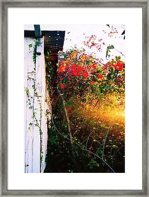 Bougainvilla  Framed Print by Kara  Stewart