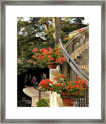 Bougainvilla On Riverwalk Framed Print