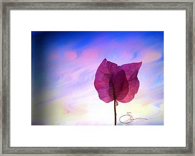 Bougainvillea 2 Framed Print by Robert Smith