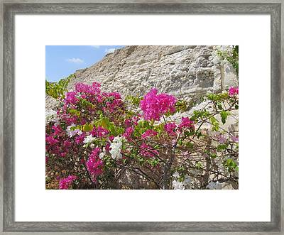 Bougainvillea At The Dead Sea Framed Print