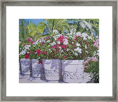 Framed Print featuring the mixed media Bougainvillea by Constance Drescher