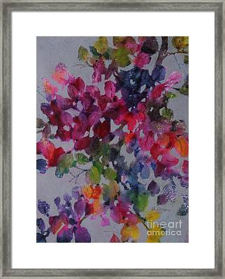 Bougainvillea Framed Print by Michelle Abrams