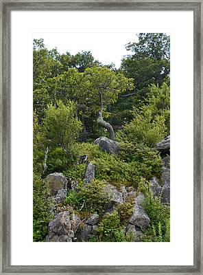 Framed Print featuring the photograph Boulder Green by Cathy Shiflett