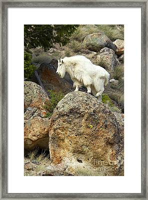 Bouldering Framed Print by Aaron Whittemore