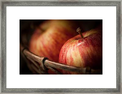 Bountiful Framed Print by Amy Weiss