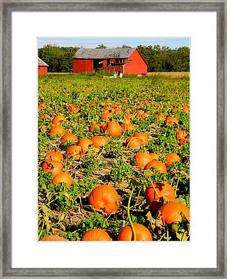 Bountiful Crop Framed Print