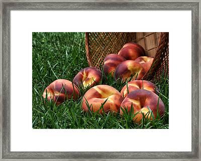 Bountiful Harvest Framed Print by Nikolyn McDonald