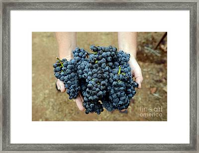 Bountiful Harvest Framed Print by Jon Neidert