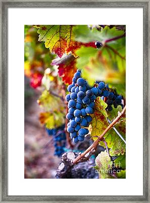 Bounty Of Napa Valley I Framed Print by George Oze