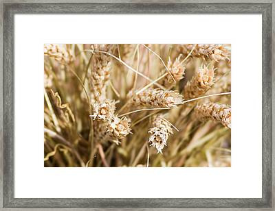 Bounty Of Nature And Labour - Featured 3 Framed Print by Alexander Senin