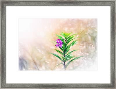 Flower In Digital Watercolor Framed Print