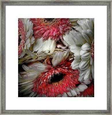 Bouquet Framed Print by Cary Shapiro