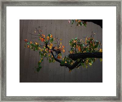 Bouquet From Autumn Leaves.three. Framed Print by Viktor Savchenko