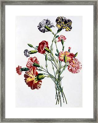 Bouquet Of Carnations Framed Print by Jean-Louis Prevost