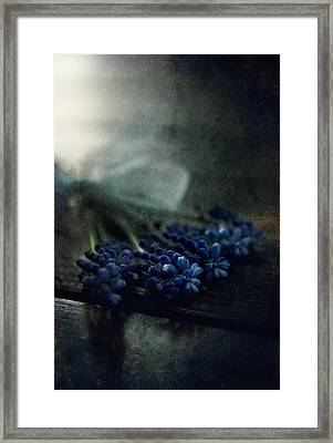 Bouquet Of Grape Hyiacints On The Dark Textured Surface Framed Print