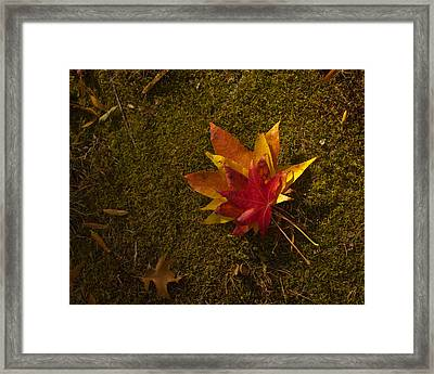 Bouquet Of Leaves Framed Print