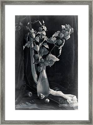 Bouquet Of Physalis Framed Print