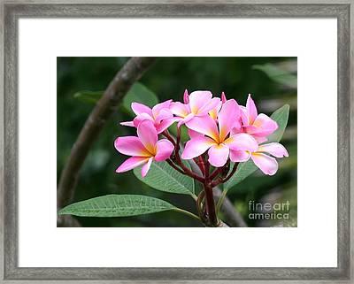 Bouquet Of Pink Plumeria Framed Print by Sabrina L Ryan