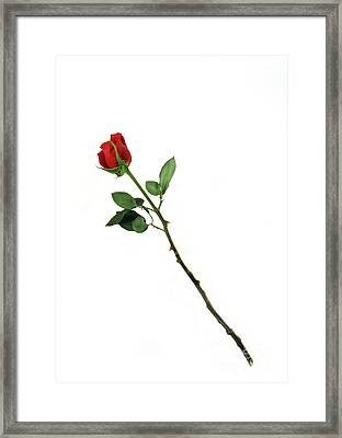 Bouquet Of Roses Art Framed Print by Boon Mee