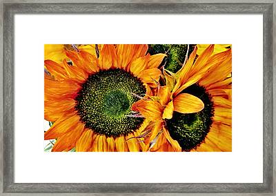 Bouquet Of Sunflowers Framed Print by Danielle  Parent