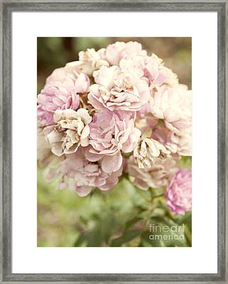 Bouquet Of Vintage Roses Framed Print by Juli Scalzi