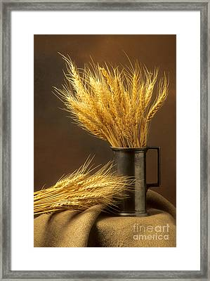 Bouquet Of Wheat Framed Print by Bernard Jaubert