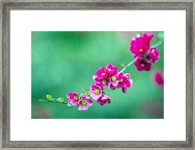 Bouquet On A Limb Framed Print by Rebecca Cozart
