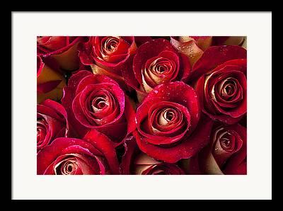 Wet Rose Framed Prints