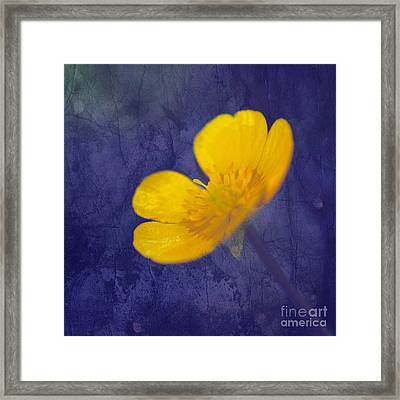 Bouton D Or - Tb01c Framed Print