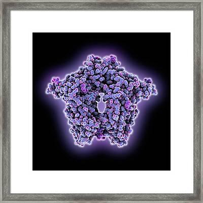 Bovine Coronavirus Enzyme Framed Print by Laguna Design