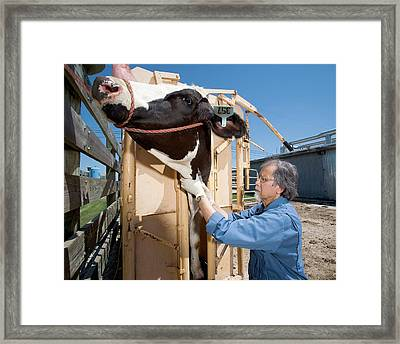 Bovine Prion Disease Research Framed Print by Stephen Ausmus/us Department Of Agriculture